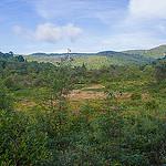 Graveyard Fields Bog Area