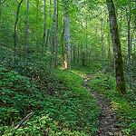 Climbing Caldwell Fork Trail Above Cataloochee