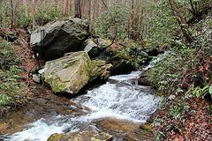 Coldspring Branch Trail