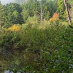 Grogan Creek in Pickelsimer Fields