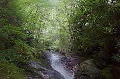 Shining Creek