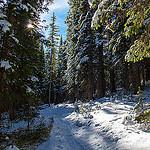 Bowman's Shortcut Trail