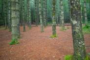 Balsam grove