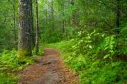 Cat Gap Trail