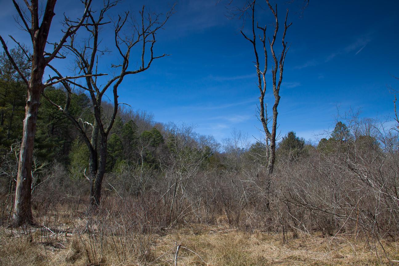 Meanderthals Cedarrockfalls Picklesimerfields