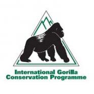 Gorilla Trekking in Uganda: Up Close with Silverbacks