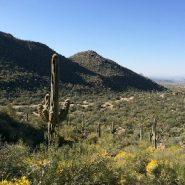 Arizona's Wild Burro Trail is a gateway into the Tortolita Mountains