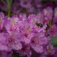 Spring Wildflowers on the Blue Ridge Parkway