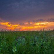 Tallgrass prairie region provides a Minnesota hiking alternative