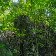 Big Butt Trail, Blue Ridge Parkway & Pisgah National Forest