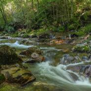 Big East Fork Trail, Shining Rock Wilderness