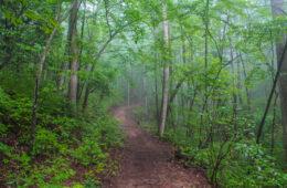 Bracken Mountain Trail, Bracken Preserve, Brevard, NC