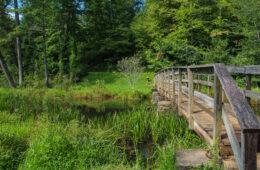 Homestead Trail, Lake Powhatan, Pisgah National Forest