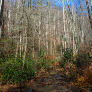 Buckhorn Gap Trail to Twin Falls, Pisgah National Forest
