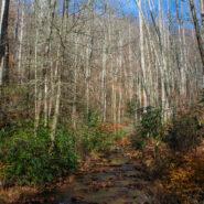 Buckhorn Gap Trail to Twin Falls, Pisgah National Forest