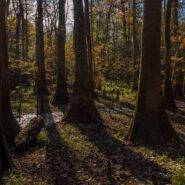 Oakridge Trail, Congaree National Park