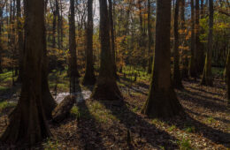 Oakridge Trail, Congaree National Park