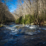 Little River, Cucumber Gap, Jakes Creek Loop at Elkmont, Great Smoky Mountains National Park