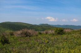 Art Loeb Trail to Grassy Cove Top, Shining Rock Wilderness