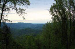 Brush Creek and Burnett Gap Trails, Cherokee National Forest