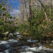 Jones Gap Trail to Jones Gap Falls, Jones Gap State Park