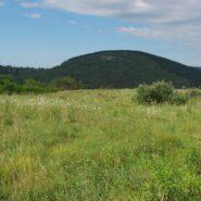 Flat Laurel Creek Trail, Pisgah National Forest