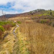 Ivestor Gap Trail to Little East Fork Trail, Shining Rock Wilderness
