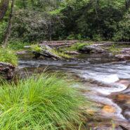 Vineyard Gap and Riverside Trails, Pisgah National Forest
