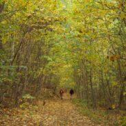 Hiking the Beautiful USA