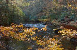 Bradley Creek Trail, Squirrel Gap Trail, Poundingmill Trail, South Mills River Trail, Pisgah National Forest