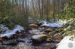 Tennessee Gulf Trail, Martha Sundquist State Forest