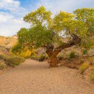 Little Wild Horse Canyon, San Rafael Swell, Utah